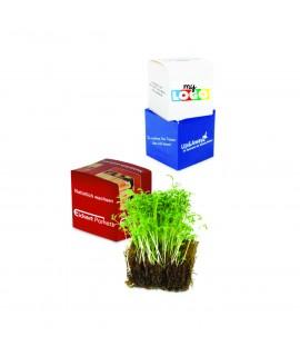 Cube de plante Cresson personnalisé